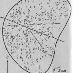 Тайна Тунгусского метеорита